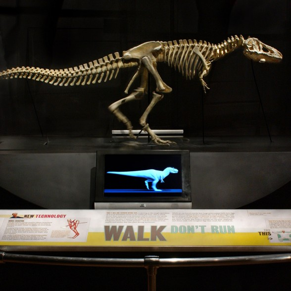 The running bio-mechanical scale model of T. rex