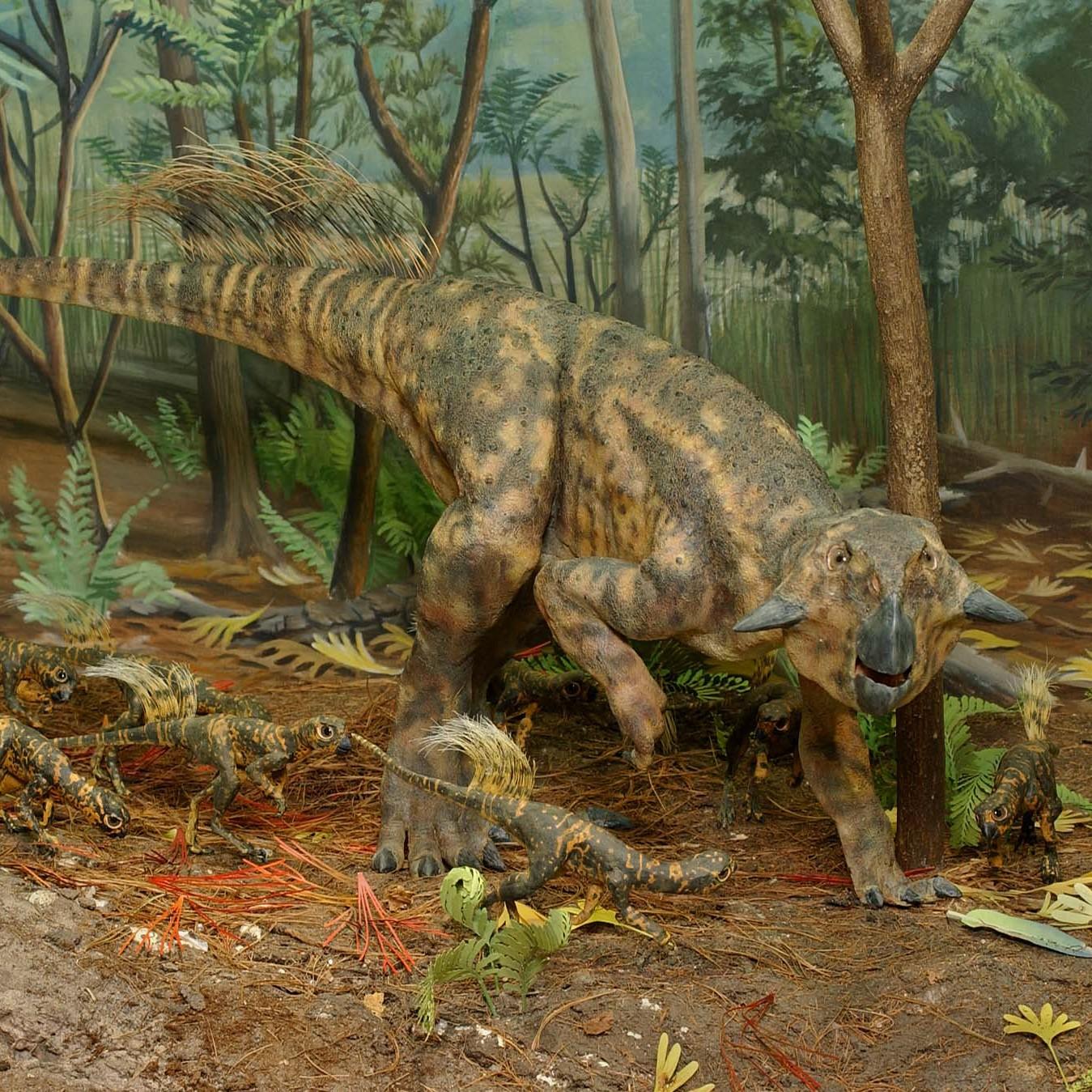 Psittacosaurus diorama
