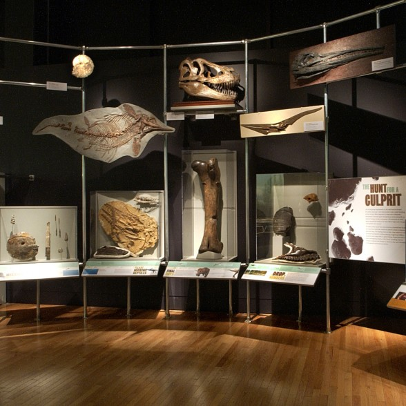 Image of a group of fossils on display