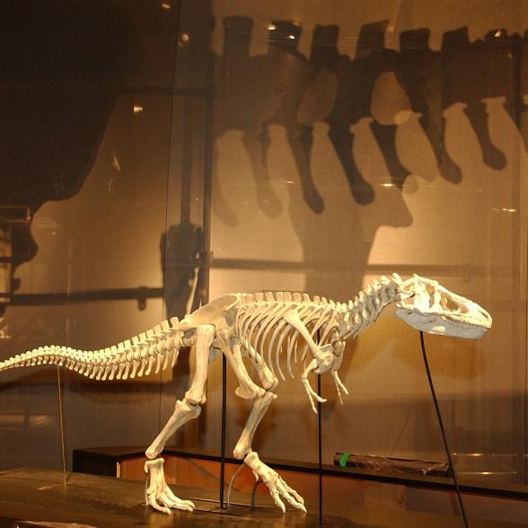 model of T. rex