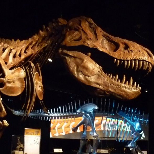 Image of T. rex with bio-mechanical model in background